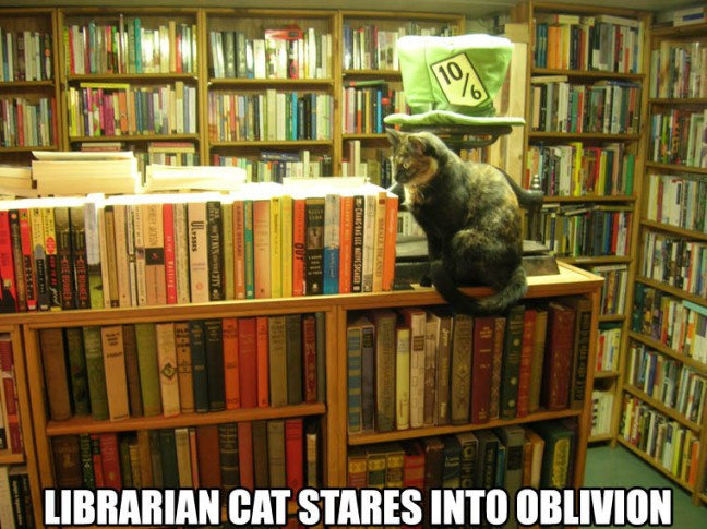 Library cat stares into oblivion (shelves crammed full of books)
